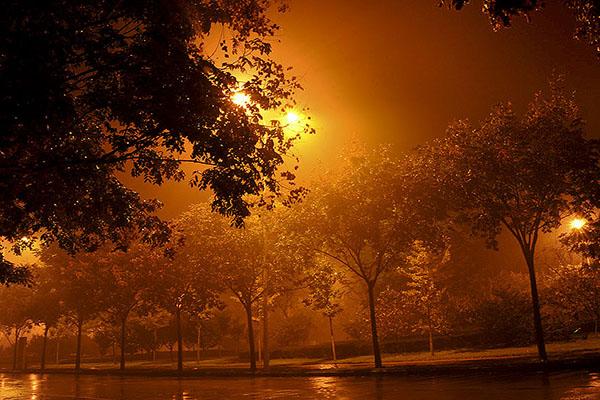 是否你也一样,喜欢在短暂告别城市喧嚣的夜,聆听风雨飘落的声音。   喜欢星星月亮的夜,繁星嵌满浩瀚宇宙,星空充满浪漫传奇,处处是诗情画意。   更是喜欢雨夜,迷上夜雨,黑暗吞没天空灿烂,独有雨丝走进心灵,别有一番韵味。   有雨的夜,这样的时候,透过洁净玻璃窗,就在橘黄灯光照射下,零星的树木一株、两株、三株直立窗外,任雨丝一阵又一阵地洒在翠绿叶丛中,积满了的雨水从叶子尖一滴、两滴、三滴滑落下来。   鸟鸣山更幽,雨落夜更静。飘雨的夜,四周显得更加静谧。微弱灯光下,有着梦幻般的感觉,滴答雨声和着呼呼风声合